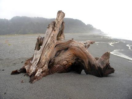 humboldt-driftwood.jpg